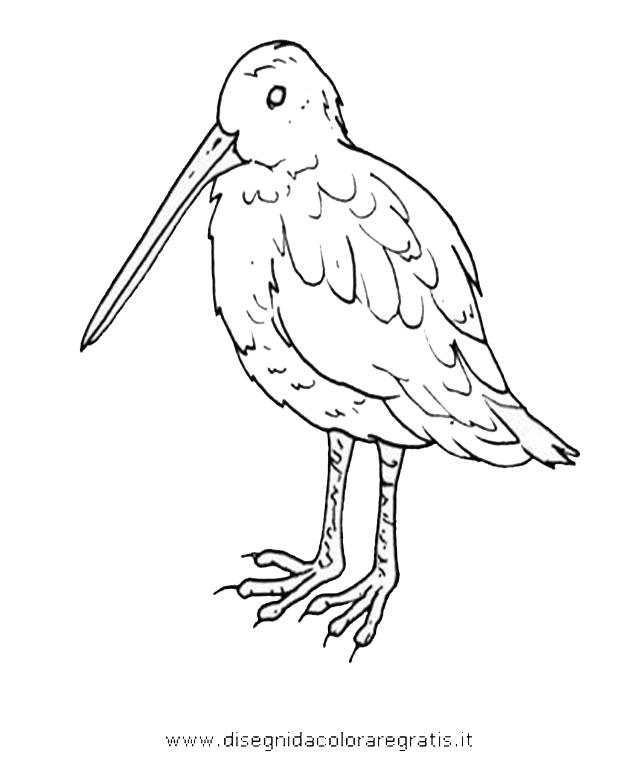 animali/uccelli/beccaccino.JPG