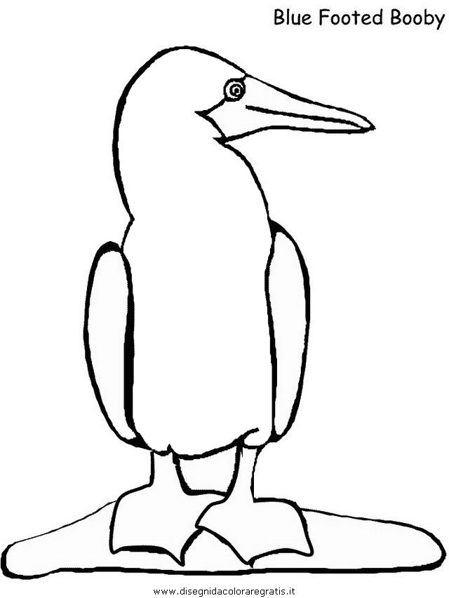 animali/uccelli/booby.JPG