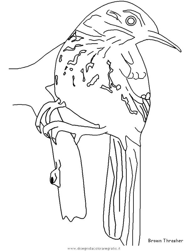 animali/uccelli/brownthrasher.JPG