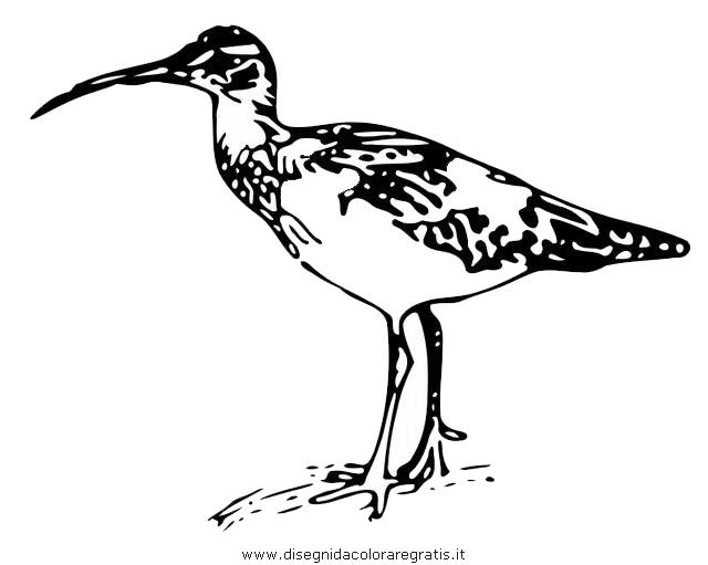 animali/uccelli/chiurlo_03.JPG
