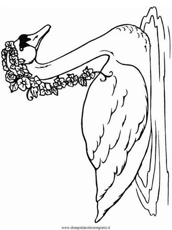 animali/uccelli/cigno_1.JPG