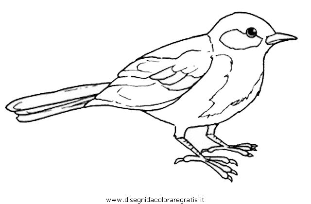 Disegno cinciallegra animali da colorare - Semplici disegni di uccelli ...