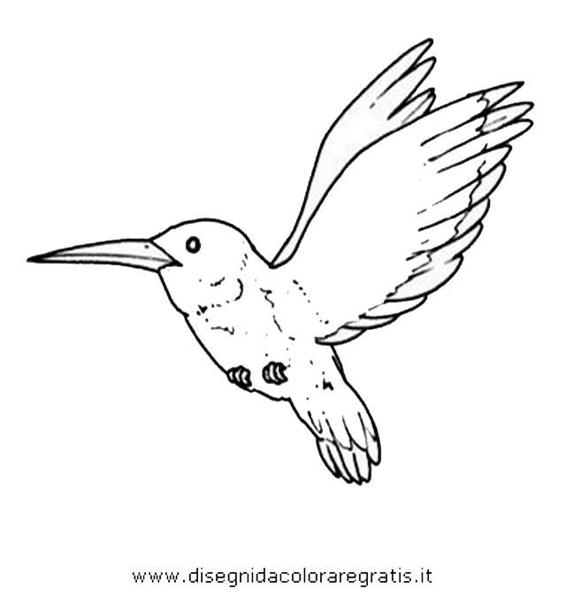 animali/uccelli/colibri.JPG