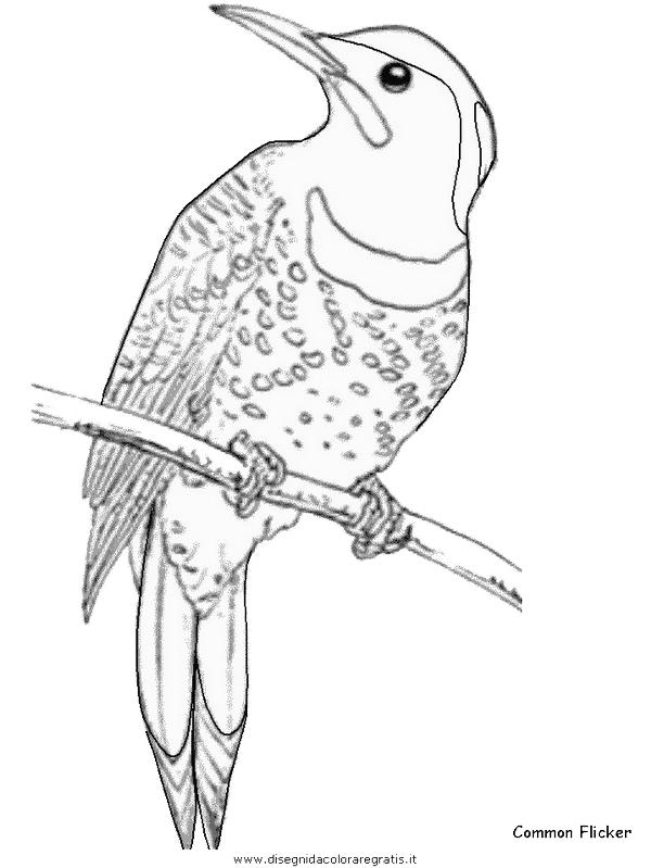 Disegno commonflicker animali da colorare - Semplici disegni di uccelli ...