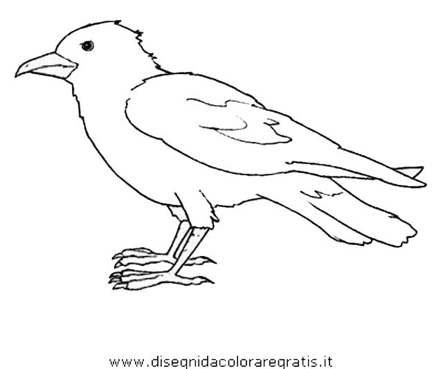 animali/uccelli/cornacchia_corvo_01.JPG