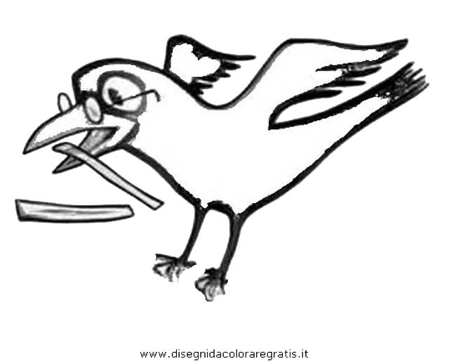 animali/uccelli/cornacchia_corvo_03.JPG