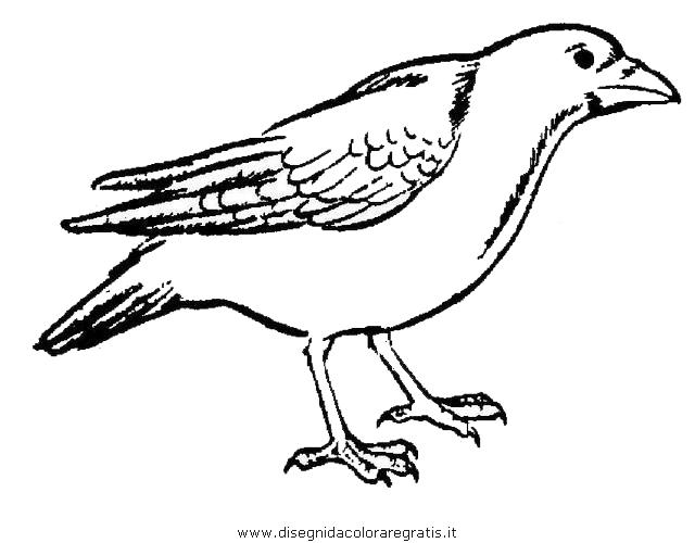 animali/uccelli/cornacchia_corvo_06.JPG