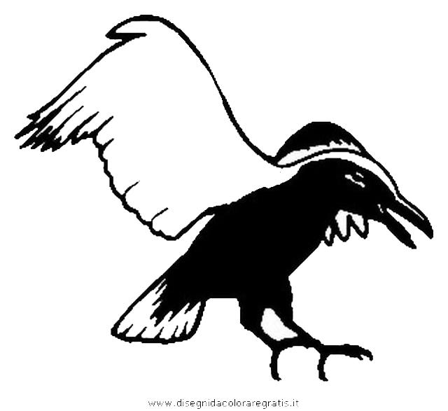 animali/uccelli/cornacchia_corvo_08.JPG