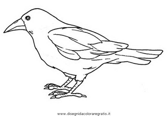 animali/uccelli/corvo.JPG
