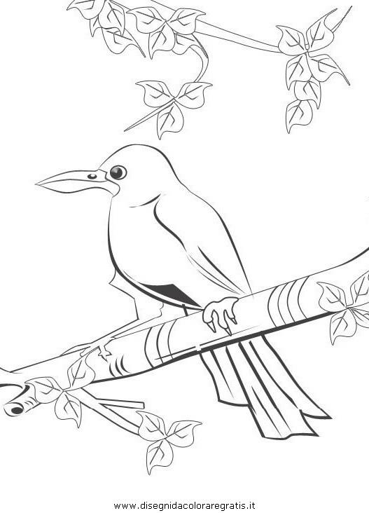 animali/uccelli/corvo_02.JPG