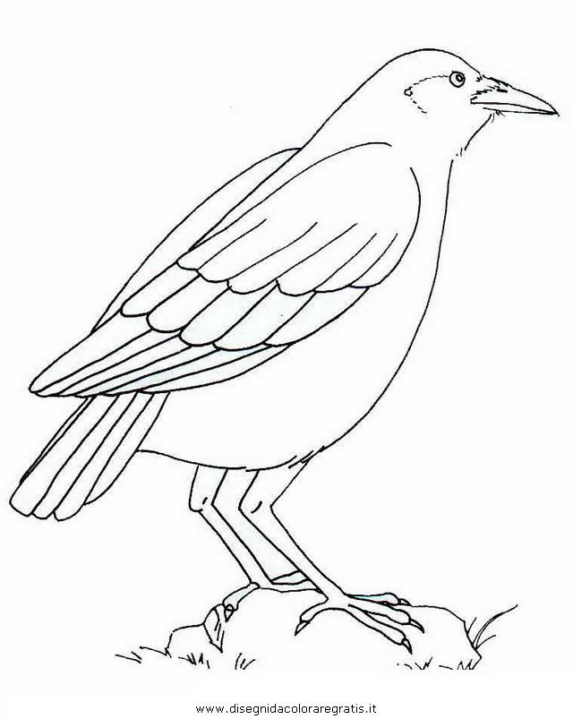 animali/uccelli/corvo_03.JPG