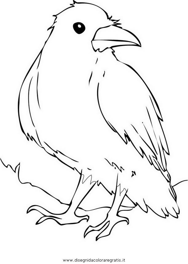 animali/uccelli/corvo_04.JPG