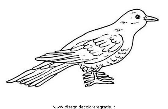 animali/uccelli/cuculo.JPG