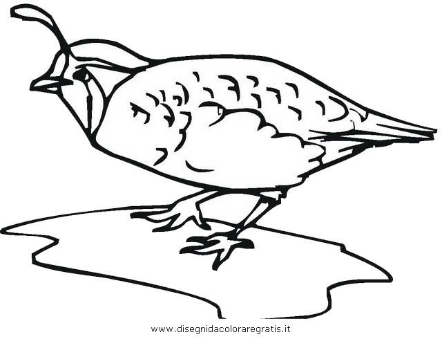 animali/uccelli/fagiano_fagiani_2.JPG