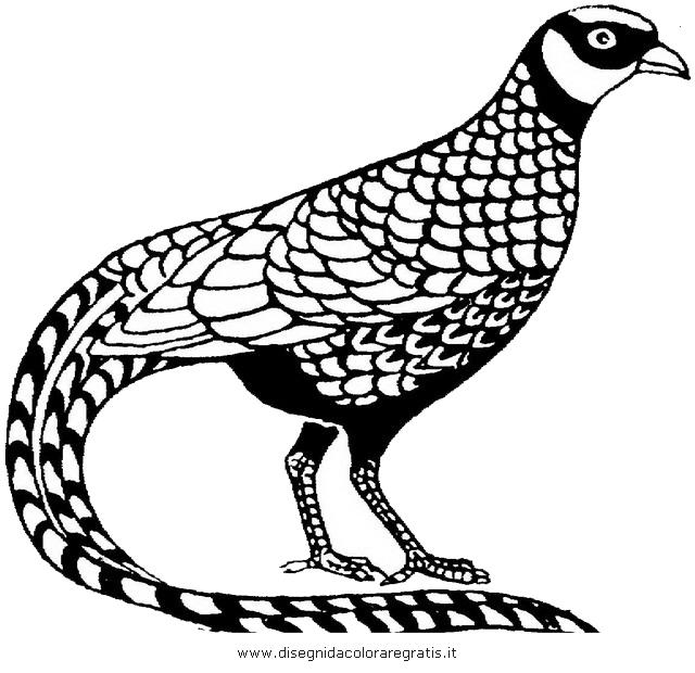 animali/uccelli/fagiano_fagiani_4.JPG