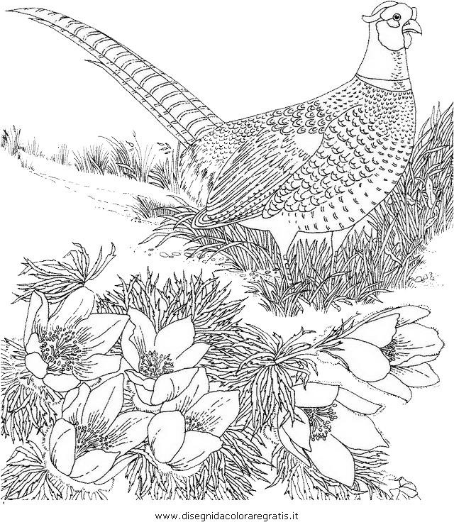 animali/uccelli/fagiano_fagiani_5.JPG