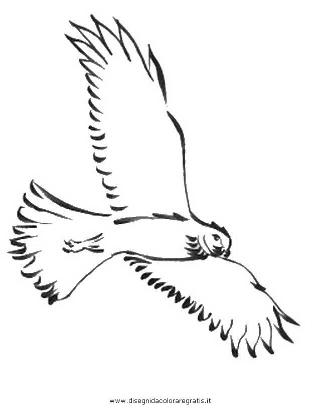 Disegno falco 01 animali da colorare - Semplici disegni di uccelli ...