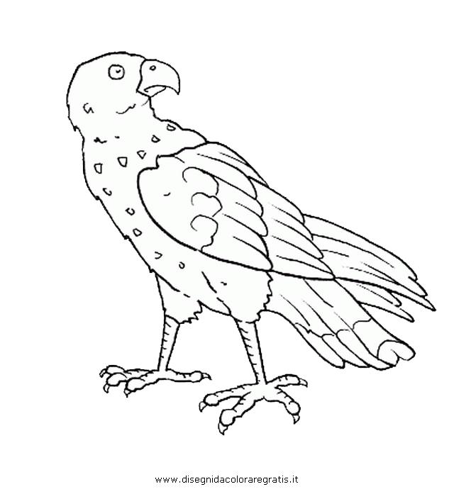 animali/uccelli/falco_02.JPG
