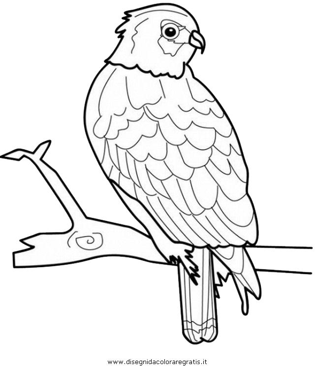 animali/uccelli/falco_03.JPG