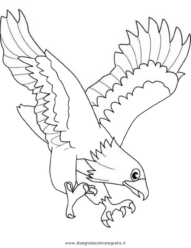 animali/uccelli/falco_04.JPG