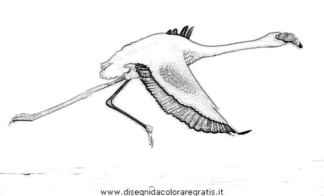 animali/uccelli/fenicotteri_30.JPG