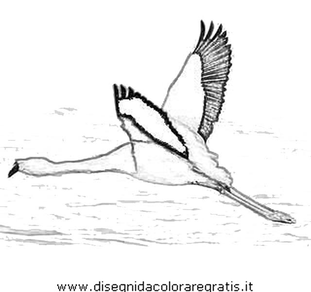animali/uccelli/fenicotteri_32.JPG