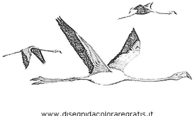 animali/uccelli/fenicotteri_33.JPG