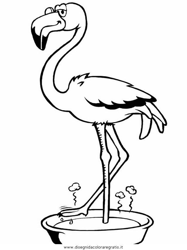 animali/uccelli/flamingo.JPG