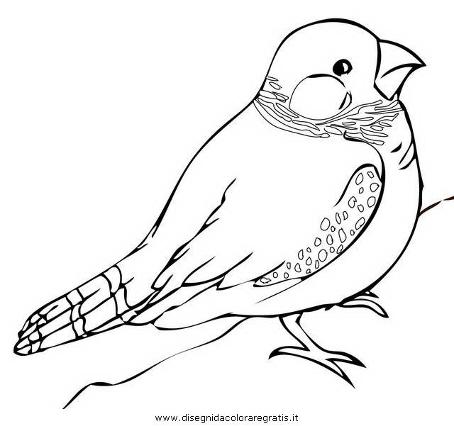 Disegno fringuello 1 animali da colorare - Semplici disegni di uccelli ...