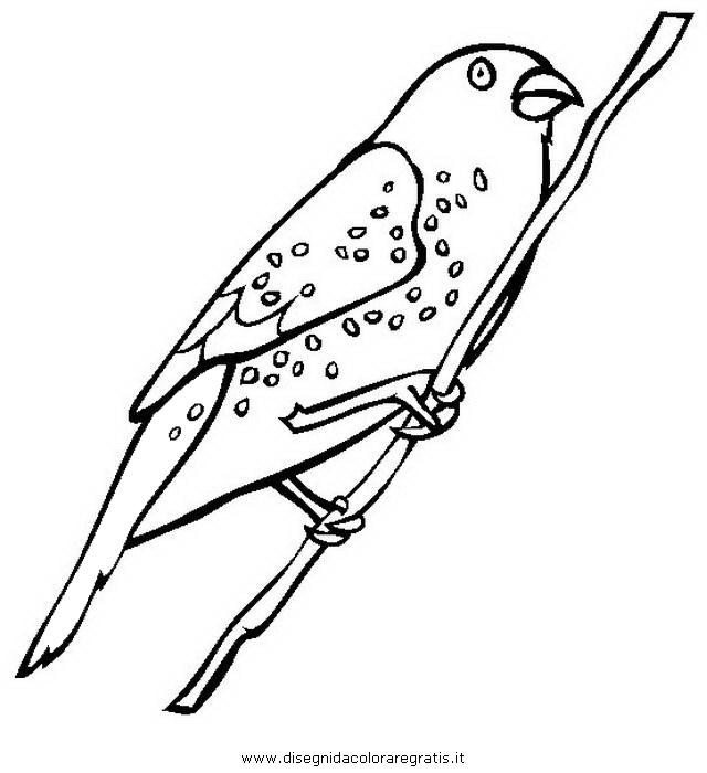 animali/uccelli/fringuello_2.JPG