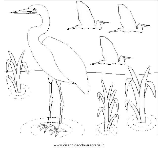 animali/uccelli/garzetta_6.JPG
