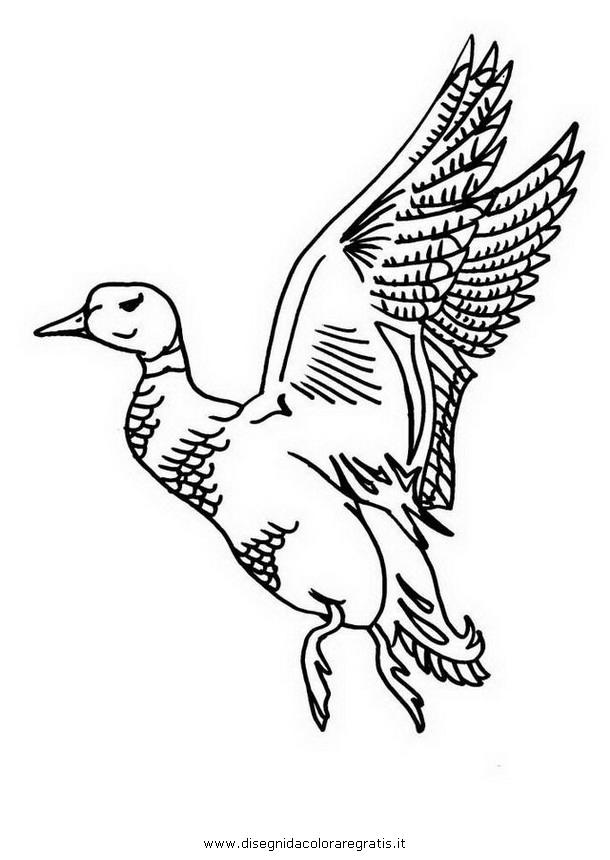 animali/uccelli/germano_reale_1.JPG