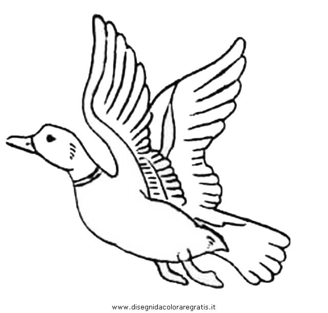 animali/uccelli/germano_reale_5.JPG