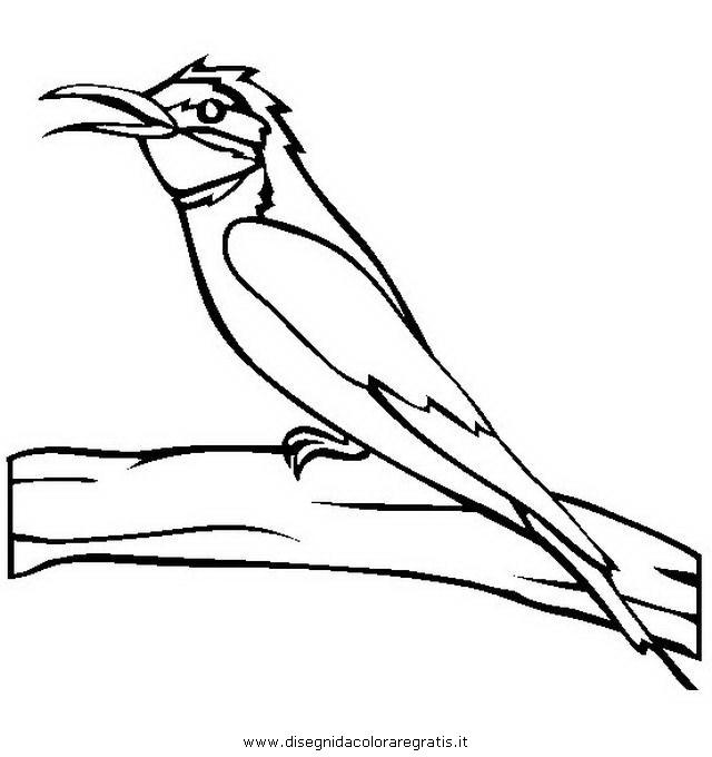 animali/uccelli/gruccione.JPG