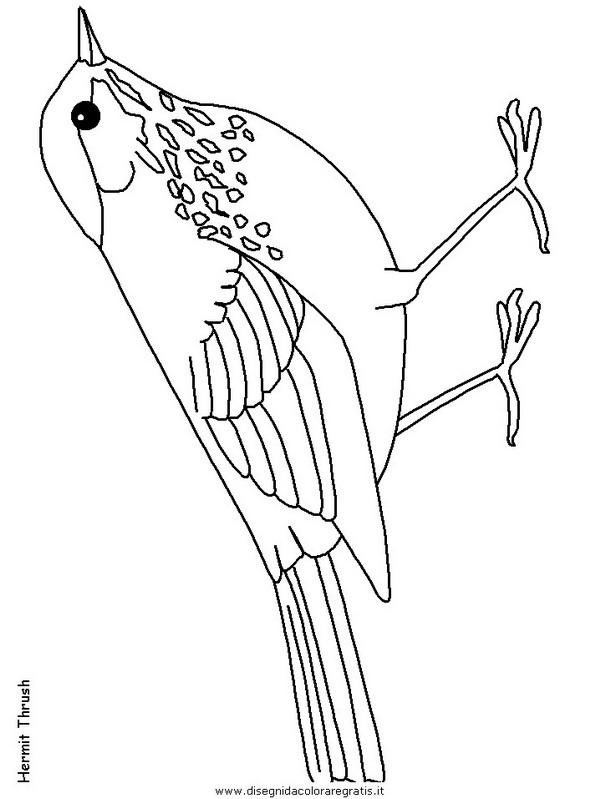 animali/uccelli/hermitthrush.JPG