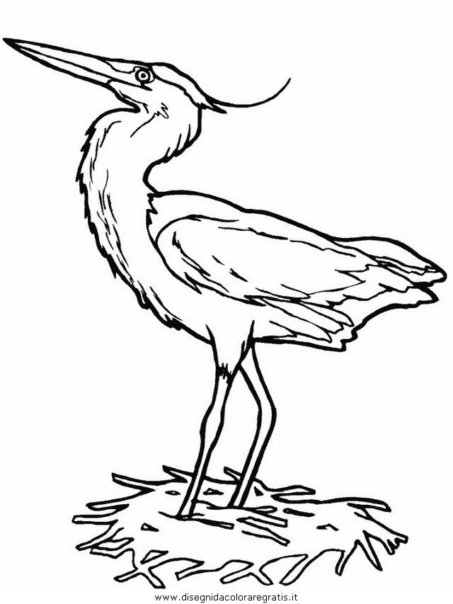 animali/uccelli/heron.JPG