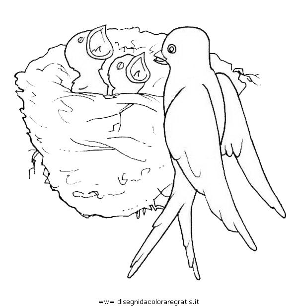 animali/uccelli/hirondelle_rondine_0.JPG