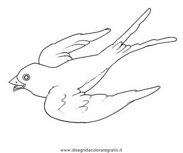 animali/uccelli/hirondelle_rondine_1.JPG