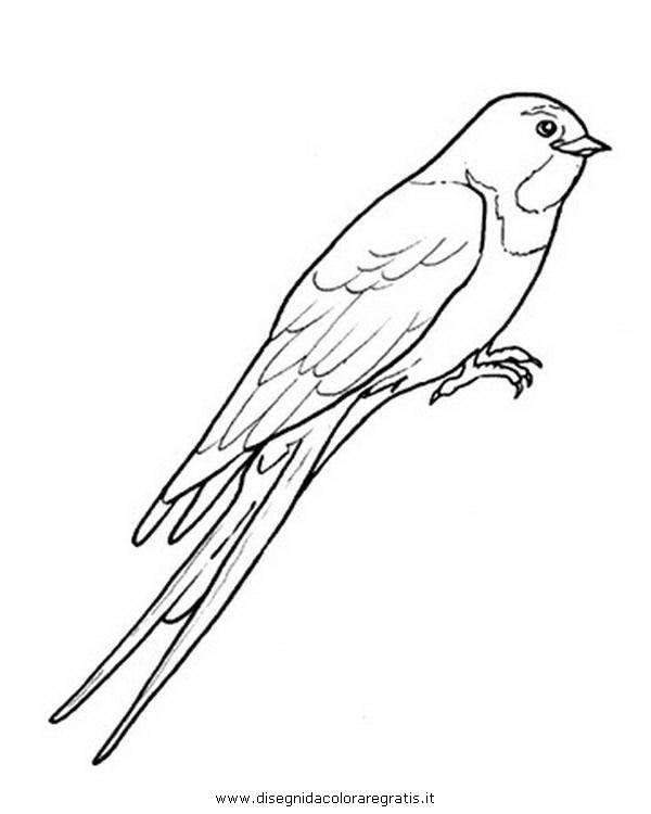 animali/uccelli/hirondelle_rondine_2.JPG