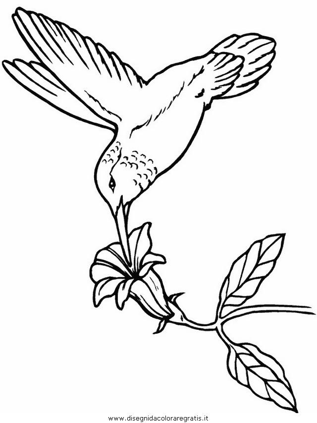 animali/uccelli/hummingbird.JPG