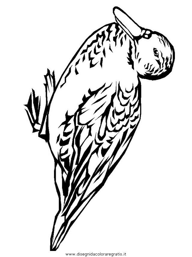 animali/uccelli/k5.JPG