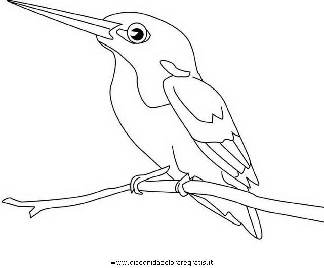 animali/uccelli/martin_pescatore_0.JPG