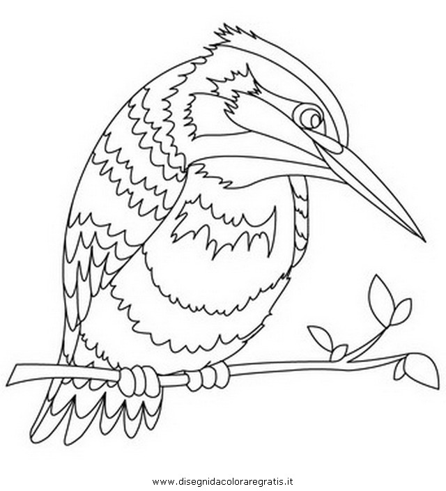 animali/uccelli/martin_pescatore_1.JPG