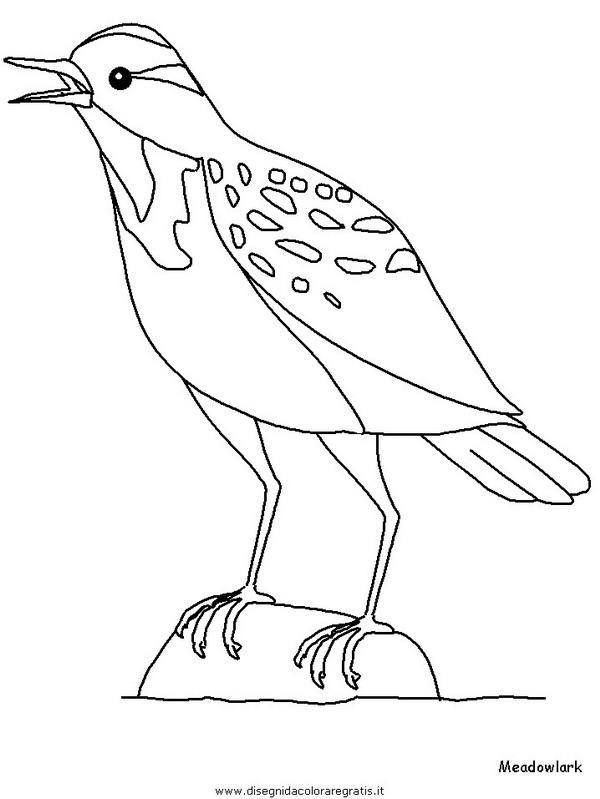 animali/uccelli/meadowlark.JPG