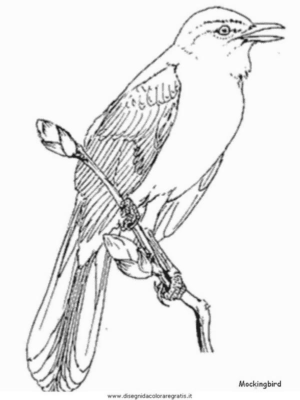 animali/uccelli/mockingbird.JPG