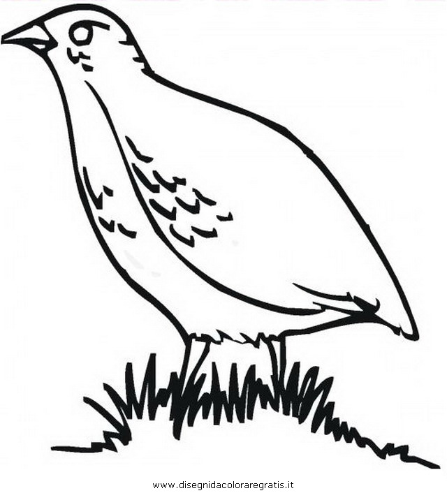 animali/uccelli/pernice_01.JPG