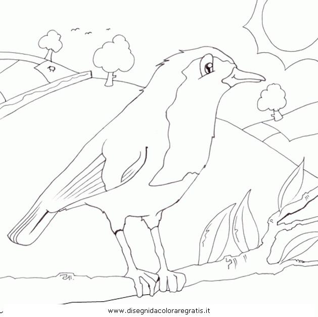 animali/uccelli/pettirosso_2.JPG
