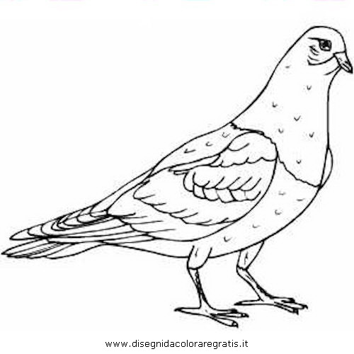 Disegno Piccione Colombo 01 Animali Da Colorare