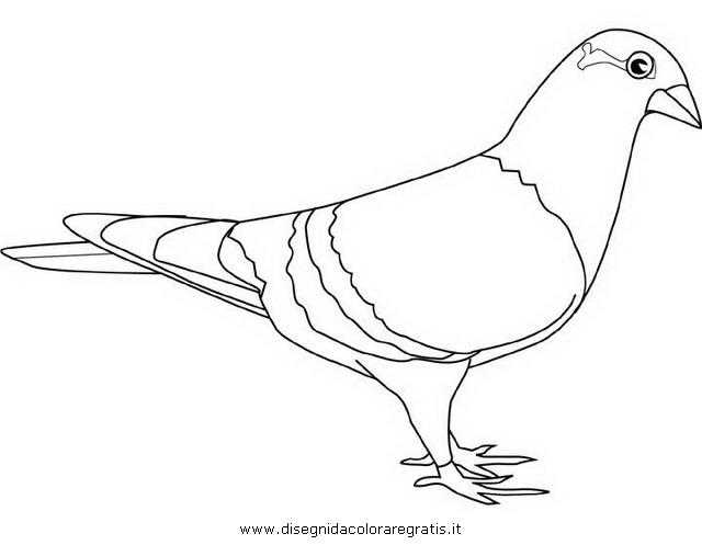 animali/uccelli/piccione_colombo_02.JPG