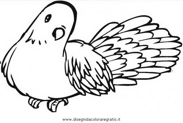 animali/uccelli/piccione_colombo_04.JPG